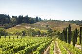 Heuvels wijngaard in californië — Stockfoto
