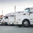 Different american trucks in a row — Stock Photo #29807933