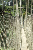 Canopy walkway in Kakum National Park, Ghana — Stock Photo