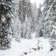 Stock Photo: Winter forest in Bansko