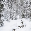 Stock Photo: Winter forest in Bansko.