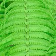 Green wet fern leaves background — Stock Photo