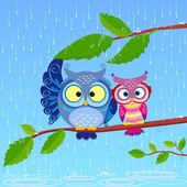 Owl rain — Stock Vector