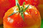 Tomate rojo fresco — Foto de Stock
