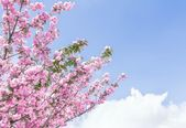 Spring tree with flowers — Stock Photo