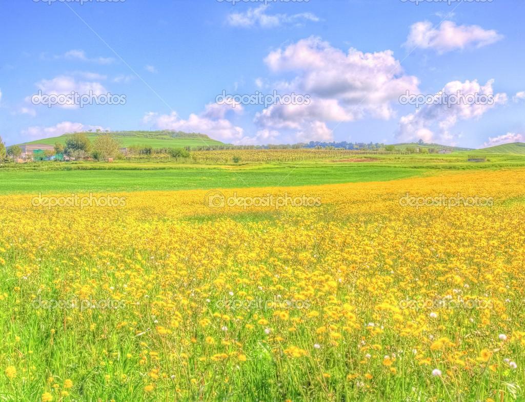 champ de fleurs jaunes du paysage sous le ciel bleu au printemps photo 45367711. Black Bedroom Furniture Sets. Home Design Ideas
