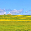 Green grass and yellow flowers field landscape under blue sky in spring — Stock Photo