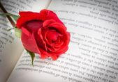 Detail of red rose on the open book — Stock Photo