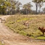 Australian rural country road scene — Stock Photo