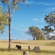 Australian rural landscape view — Stock Photo
