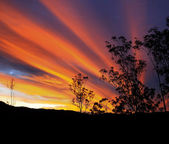 Gum tree silhouette with brilliant Australian autumn sunset — Stock Photo