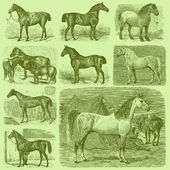 Set of 9 Vintage Engraved Horses — Stock Vector