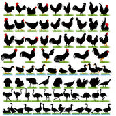 77 Farm Birds Detailed Silhouettes Set — Stock Vector