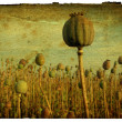 Retro Background - Poppy Field — Stock Photo