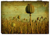 Retro Background - Poppy Field — 图库照片