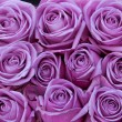 Stock Photo: Purple roses