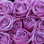 Постер, плакат: Purple roses