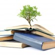 Tree growing from book — Stock Photo #36711913