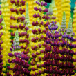 Chelsea Flower Show — Stock Photo #48660181