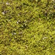 Green moss background — Zdjęcie stockowe