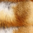 Stock Photo: Red fox fur background texture