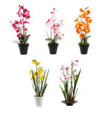 Various orchids in pots isolated on a white background — Stock Photo