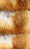 Red fox fur background texture — Stock Photo