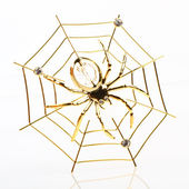 Jewelry spider on the gold web — Stock fotografie