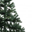 Spruce over white — Stock Photo #34803563