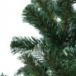 Spruce over white — Stock Photo