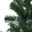 Spruce over white — Stock Photo #34803653