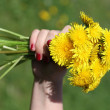Bouquet of dandelions on womans hand — Stock Photo