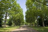 Kensington Gardens in London — Stock Photo