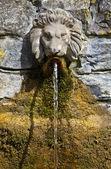 Testa di leone fontana al calice di bere bene — Foto Stock