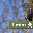 Pigeon on a Pedestrian Signpost in London — Stock Photo #42412031
