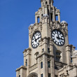 Royal Liver Building in Liverpool — Stock Photo