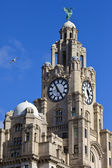 Royal Liver Building in Liverpool — Foto Stock