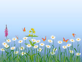 Meadow flowers — Stock Vector