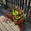 Wooden wheel-barrow full of flowers. — Stock Photo