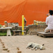 Man praying at buddhist shrine ayutthaya thailand - Stok fotoğraf