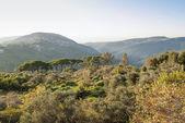 Valley near beirut in lebanon — Stock Photo