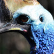 Cassowary — Stock Photo #18242915