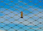 ネットで南京錠します。 — ストック写真