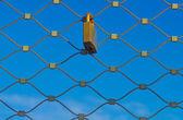 замка сети — Стоковое фото
