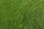 çayır çimen — Stok fotoğraf