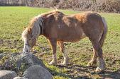 馬動物 — ストック写真