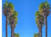 Sunset Boulevard LA — Zdjęcie stockowe