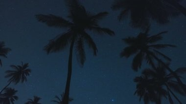 Palms silhouette with stars — Stock Video