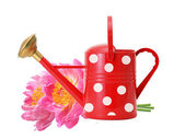 Red watering can and pink peony flowers isolated on white — Stock Photo