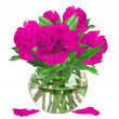 Beautiful pink peonies in glass vase with bow isolated on white — Stock Photo